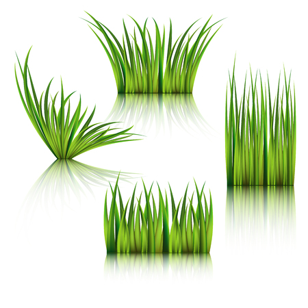 sod: Fragments of the green grass isolated on white. Illustration