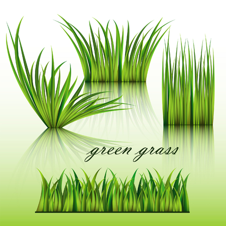 greensward: Fragments of the green grass isolated on green background.
