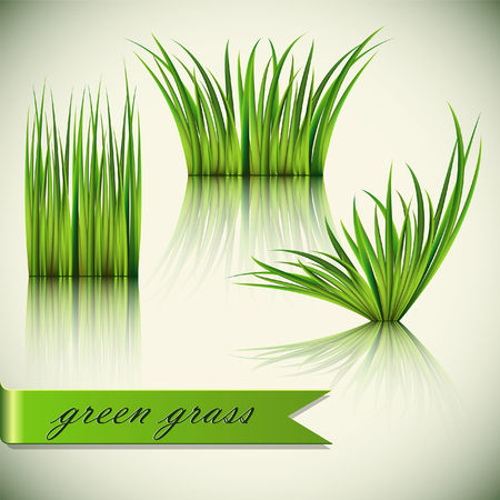 sod: Fragments of the green grass isolated on green background.