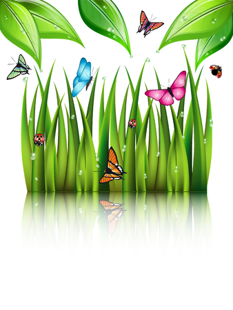 greensward: Flying butterflies by the grass and leaves with theirs reflection in the water.