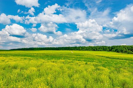 naturalistic: Field with flowers at hot day summer time.