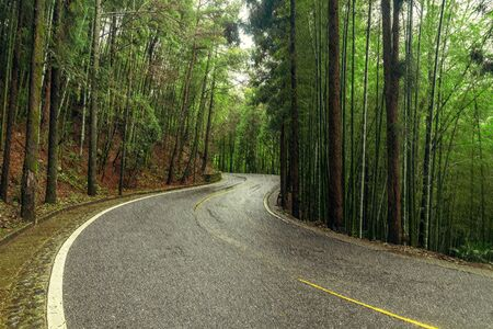 View of the road in the wet autumn forest. Stock Photo