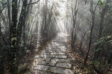 straight path: Foggy morning in the park.