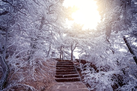 corona navidad: Winter stairway view in Huangshan National park.