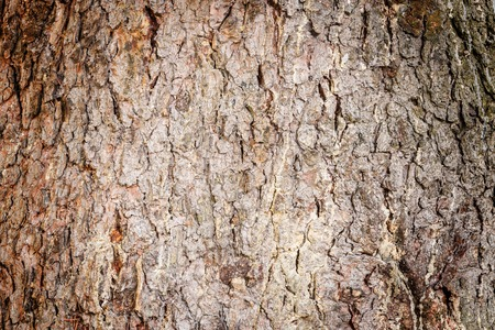 Tree bark texture. Surface of the old tree trunk. Stock Photo