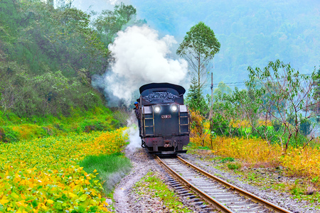 Steam narrow-gauge train moves frough the jungle.