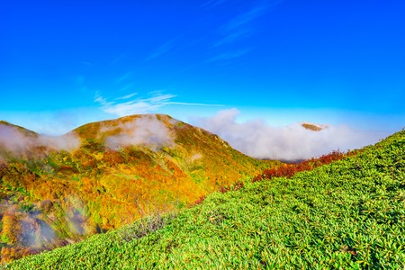 withering: Autumn autumn mountain landscape at morning time. Caucasus. Russia.