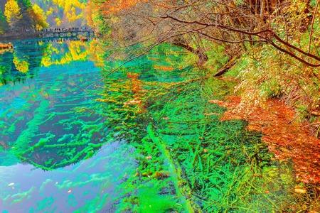 Trees by the colorful lake at autumn day time. Jiuzhaigou nature reserve, Jiuzhai Valley National Park, China. Stock Photo