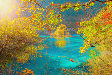 Autumn trees by the lake. Jiuzhaigou nature reserve, Jiuzhai Valley National Park, China.