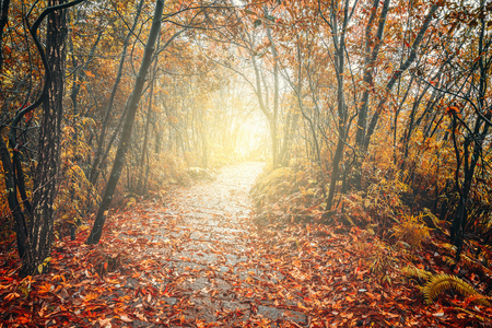 Wet stone path in Zhangjiajie Forest Park at rainy autumn day time. China. Stock Photo