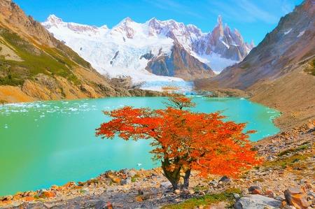 Autumn tree by the lake near Cerro Torre mountain. Los Glaciares National park. Argentina. Archivio Fotografico