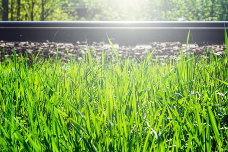 Green spring grass along the railway at evening time.