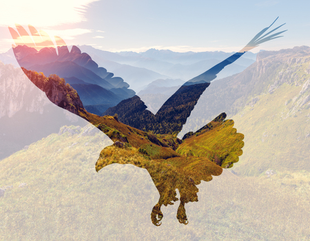 Bald eagle on mountain landscape background. Double exposure illustration. Reklamní fotografie