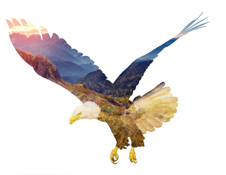 Bald eagle on white backgroun. Double exposure illustration.