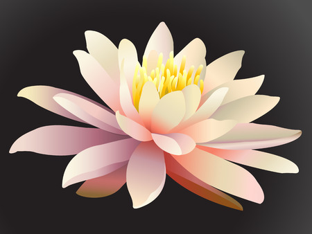 Lotus flower on dark background. Illustration