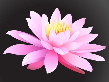 Lotus flower on dark background. Stock Vector - 103935030
