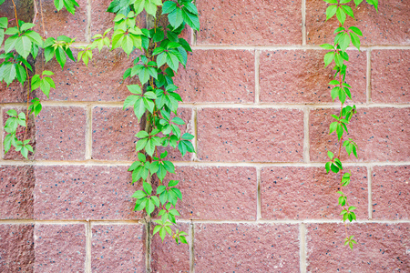 Plant parts on colorful brick wall background.