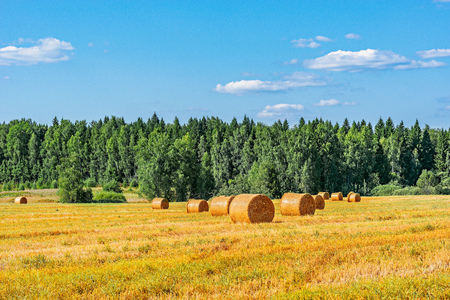 Hay bales on the field by the forest.