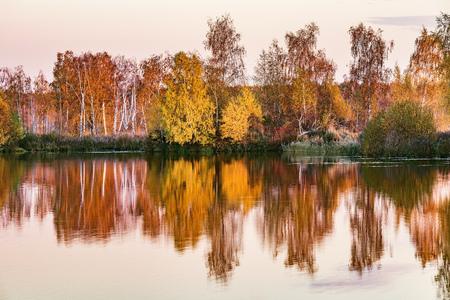 Autumn birch trees by the lake. Stock Photo