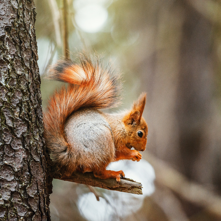 Small squirrel sits on the tree in the forest. Stok Fotoğraf