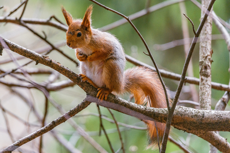 Small squirrel sits on the tree in the forest. Foto de archivo
