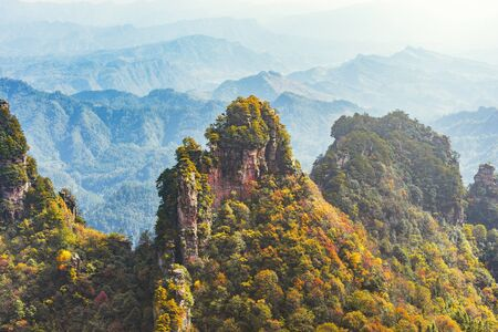 Colorful cliffs in Zhangjiajie Forest Park at sunny autumn morning time. China.