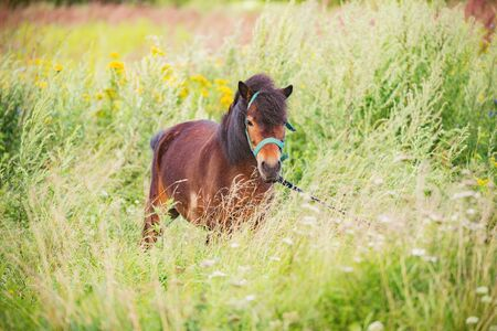 Small horse in the field of scenic nature landscape.