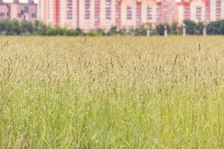 Grass on the meadow by the city.