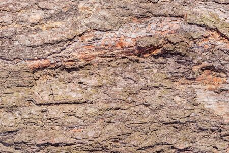 Tree bark texture. Surface of the old tree trunk. Imagens