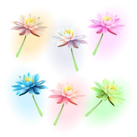 Lotus flowers on white background. Vector illustration. Stock Vector - 140621353