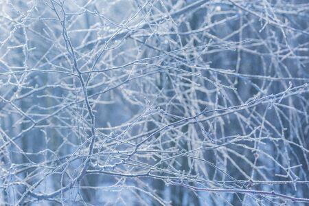 Frozen tree branches. Imagens - 140864486