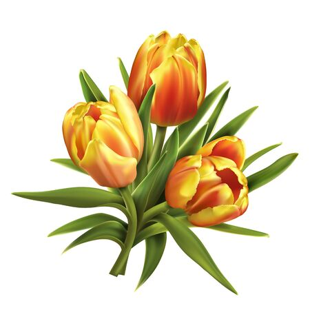 Colorful tulips bouquet on white background. Ilustração