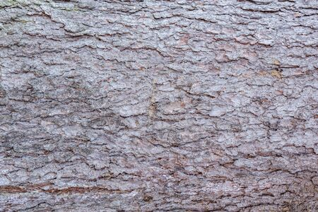 Pine tree bark surface. Surface of the old tree trunk.