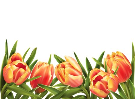 Colorful tulips bouquet isolated on white background. Vector illustration.