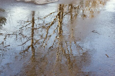 Trees reflection in the puddle on the asphalt road.