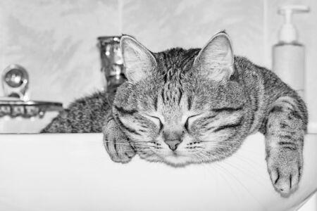 Cat sleeps in the white bathroom sink.