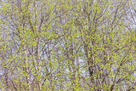 Tree branches background. 免版税图像