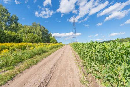 Dusty road by the cornfield. 免版税图像