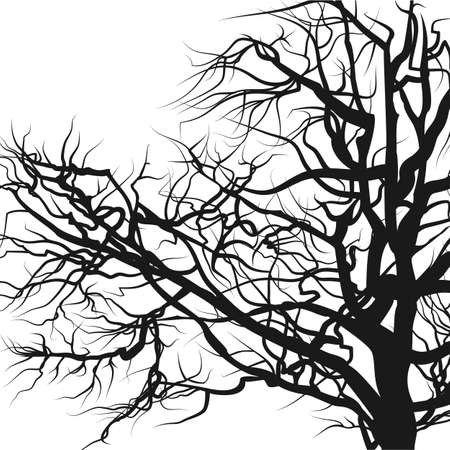 Tree silhouette isolated on white.