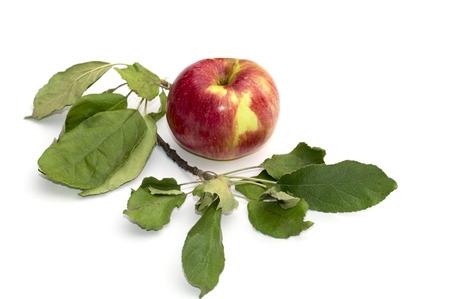 manzana: Todavía manzana vida y una rama de un árbol de manzanas, la imagen aislada, una fruta objeto