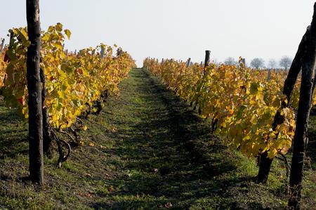 rudesheim: fall, vineyards on hills, a subject seasons and the nature Stock Photo