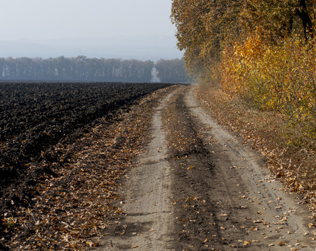 earth road: the plowed field and the earth road at an oak grove, a subject fall and the nature