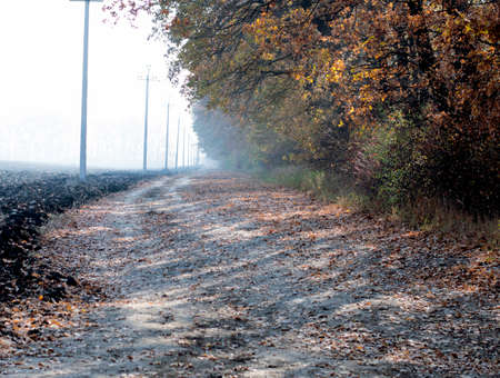 gold road: morning fog, the plowed field and the road at a gold oak grove, a subject fall and the nature Stock Photo