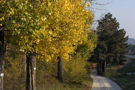 Fußweg am gelben Holz nahe der Route, ein Thema fallen und die Natur Standard-Bild
