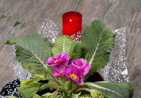 window plant: beautiful window plant and candle behind, a still life on a subject flowers