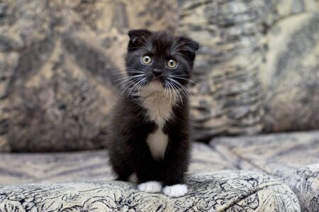 Beautiful kitten sitting on the couch, the theme of kittens and cats