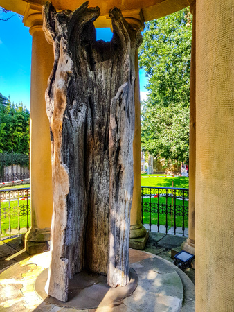 Guernica, Spain: The old oak tree of Gernika that symbolizes traditional freedoms
