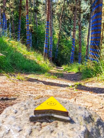 Urdaibai Biosphere Reserve, Bizkaia,Spain; 2018-04-16: Trunks of painted pine in El bosque de Oma, Redactioneel