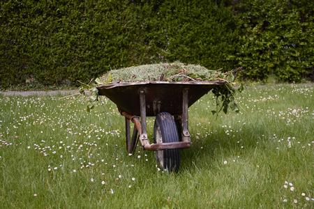 Garden cart with freshly cut green grass large t on the lawn. Garden works Standard-Bild - 122905255