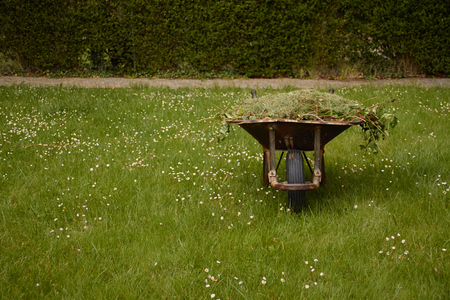 Garden cart with freshly cut green grass large t on the lawn. Garden works Standard-Bild - 122905052